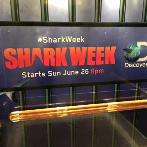 Shark week branding